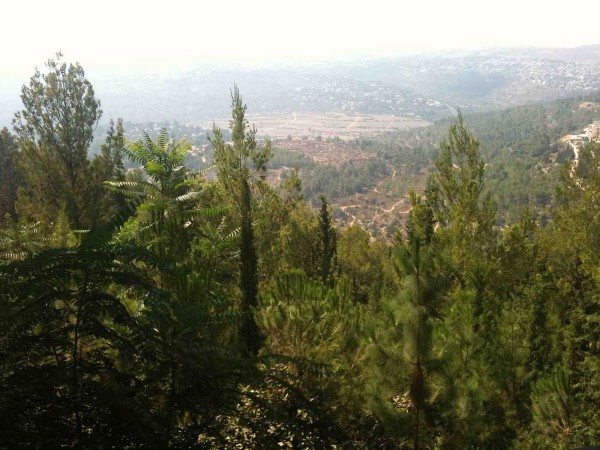 Reforestation in Israel