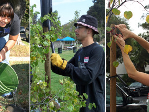 VOLUNTEER WITH MUSIC FOR RELIEF AND TREE PEOPLE