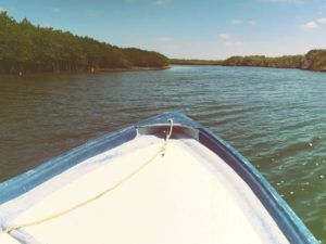 Ocean Protection / Mangrove Adventure