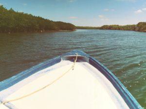 Ocean Protection / Mangrove Adventure