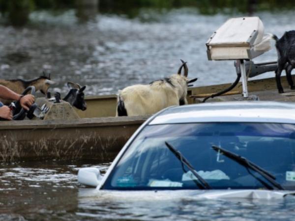 500-year Storm, Louisiana Flooding